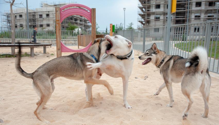 גינת כלבים בחריש. צילום: אורן קלר