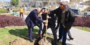 שמואל אבואב נוטע עץ