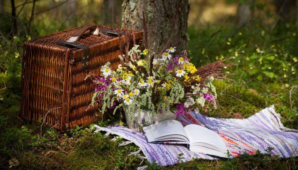 פיקניק ביער צילום: canva